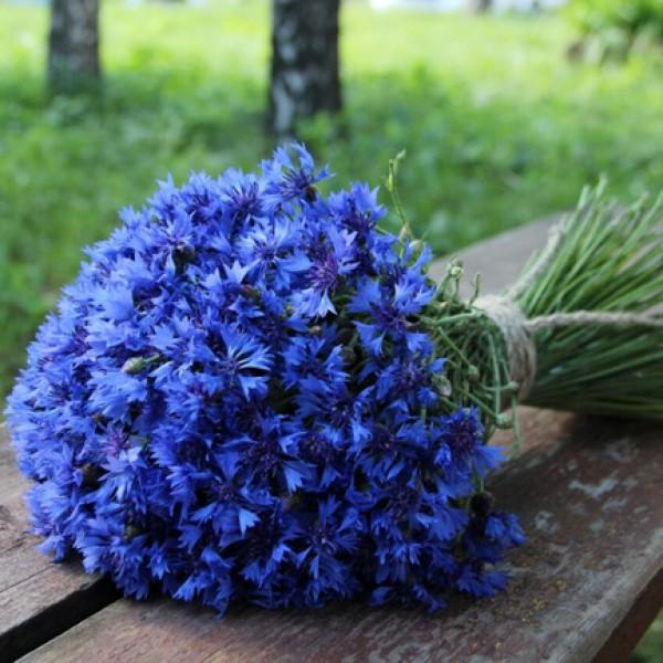 Букет васильков цена, заказ цветов по интернету в спб с бесплатная доставка